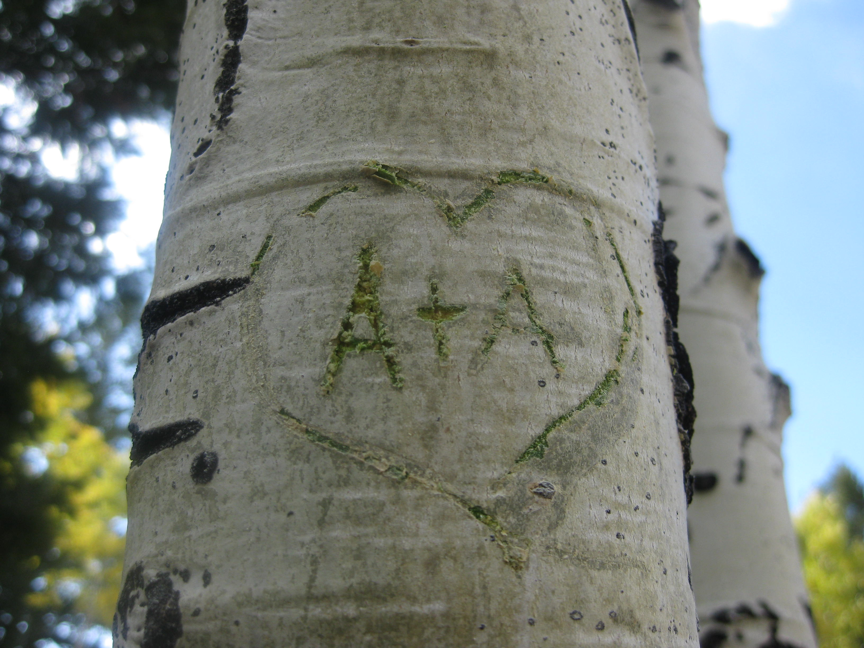 Carve My Initials Into A Tree The Other A List