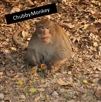 Chubby Monkey